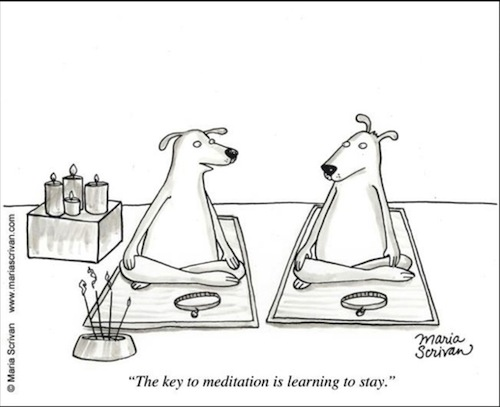 Dog Meditation Joke